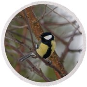 Great Tit Male Round Beach Towel