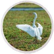 Great White Egret Ahoy Round Beach Towel