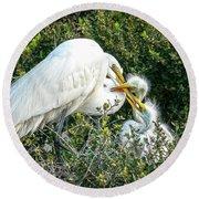 Great White Egret Family Round Beach Towel