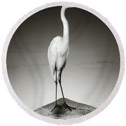 Great White Egret On Hippo Round Beach Towel