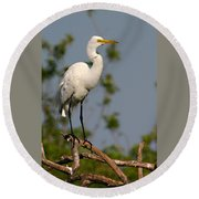 Great White Egret Pose Round Beach Towel