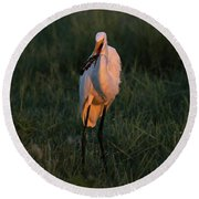 Great White Egret With Armored Catfish Round Beach Towel
