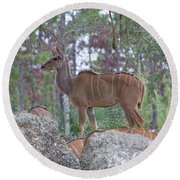 Greater Kudu Female - Rdw002756 Round Beach Towel