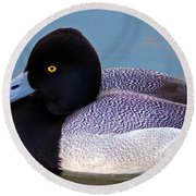 Greater Scaup  Round Beach Towel