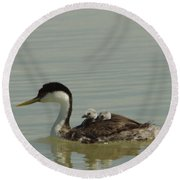 Grebe With Two Chicks On Its Back Round Beach Towel