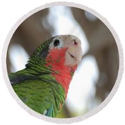 Green And Red Conure With Ruffled Feathers Round Beach Towel