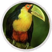 Green-billed Toucan Perched On Branch In Jungle Round Beach Towel