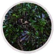 Green-black Cucculent Plant. Big Bush Round Beach Towel