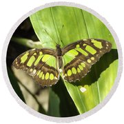 Green Butterfly Round Beach Towel