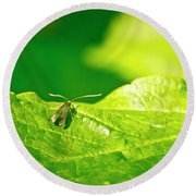 Green Creature On A Broad Leaf. Round Beach Towel