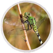 Green Dragonfly Closeup Round Beach Towel