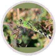 Green Dragonfly Macro Round Beach Towel