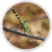 Green Dragonfly On Twig Round Beach Towel