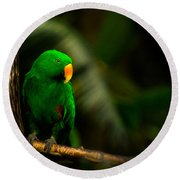 Green Eclectus Parrot Male Round Beach Towel