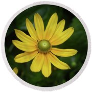 Green Eyed Daisy Round Beach Towel