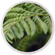 Green Fern Round Beach Towel
