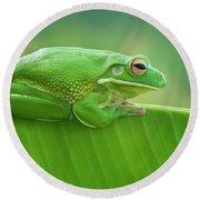 Green Frog Whitelips Round Beach Towel