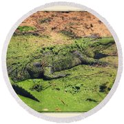 Green Gator With Border Round Beach Towel