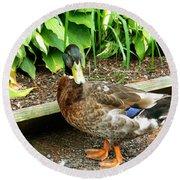 Green Head Mallard Duck 2 Round Beach Towel