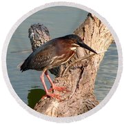Green Heron 1 Round Beach Towel