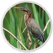 Green Heron At The Governor's Palace Gardens Round Beach Towel