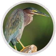 Green Heron Butorides Virescens Round Beach Towel