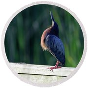 Green Heron Calling Softly In The Early Morning Round Beach Towel