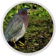 Green Heron In Swampy Water Round Beach Towel