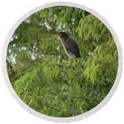 Green Heron In Tree Round Beach Towel