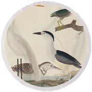 Green Heron, Night Heron, Young Heron, And Great White Heron Round Beach Towel