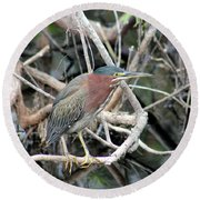 Green Heron On A Branch Round Beach Towel