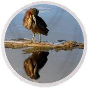 Green Heron Preening Round Beach Towel