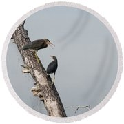 Green Herons At The Water Cooler Round Beach Towel