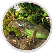 Green Iguana Round Beach Towel