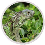 Green Iguana Vertical Round Beach Towel