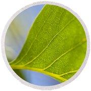 Green Leaf Backlit  Round Beach Towel
