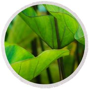Green Leaves At Cantigny Round Beach Towel