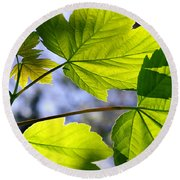 Green Leaves Round Beach Towel by Carlos Caetano