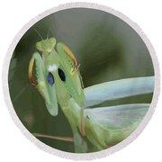Green Mantis With Garden Background Vector Round Beach Towel