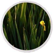 Green Marsh Grass At Sunrise On Lake Cassidy  Round Beach Towel