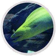 Green Moray Eel Round Beach Towel