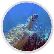 Green Sea Turtle 3 Round Beach Towel