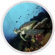 Green Sea Turtle Resting On A Plate Round Beach Towel