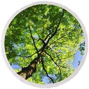 Summer Tree Canopy Round Beach Towel