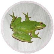 Green Tree Frog - Hyla Cinerea Round Beach Towel