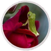 Green Tree Frog And Red Roses Round Beach Towel