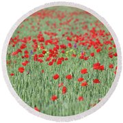 Green Wheat And Red Poppy Flowers Field Round Beach Towel