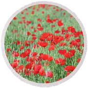 Green Wheat With Poppy Flowers Round Beach Towel