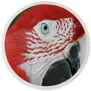 Green-winged Macaw Close Up Round Beach Towel