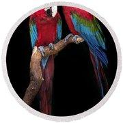 Green Winged Macaw Portrait Round Beach Towel